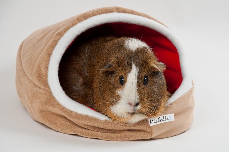 Как сделать домик или клетку для морской свинки своими руками