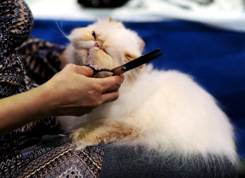 5 лучших машинок для стрижки кошек