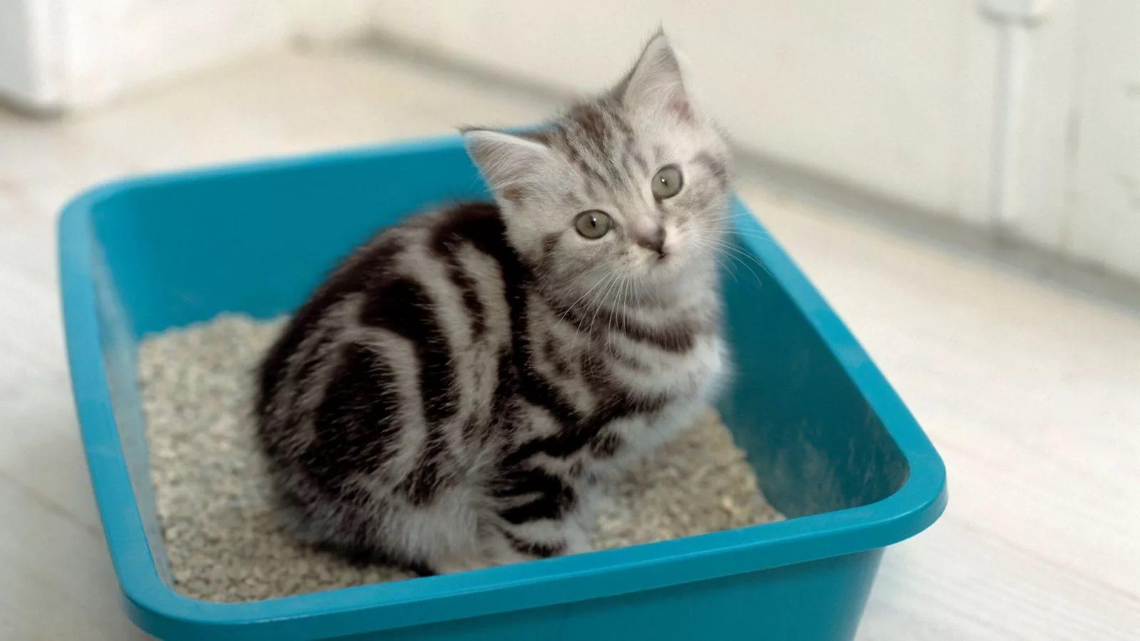 Наполнитель для кошачьего туалета (60 фото): какой наполнитель для кошек, котят и котов лучше выбрать? Виды и рейтинг наполнителей 2019, отзывы