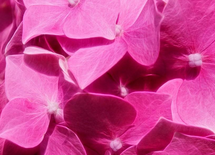 Картинки просто розовый цвет