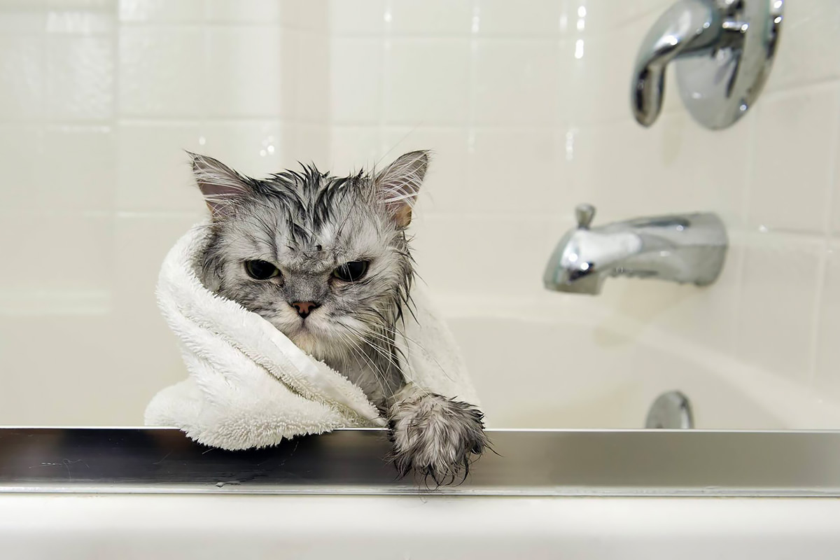 Шампунь для кошек выбираем тот самый