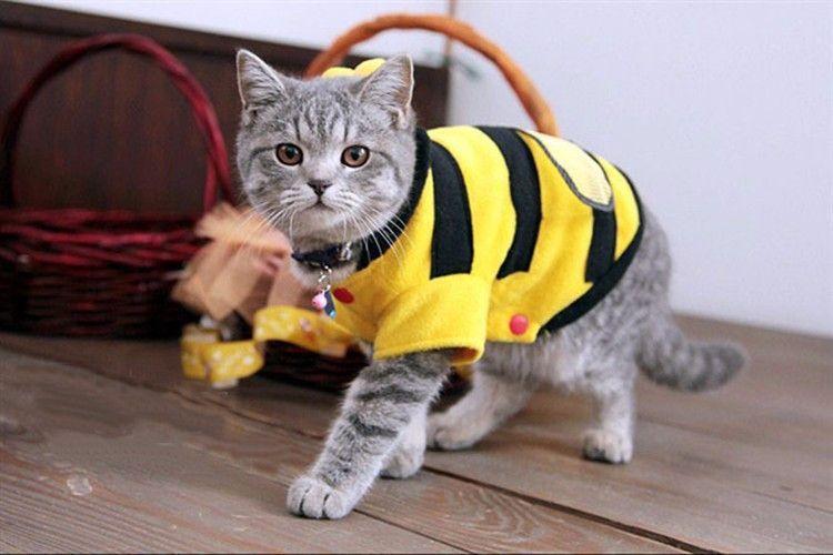 Как самой сшить дородовый бандаж. Бандаж для кошки: выкройки и инструкция по изготовлению. Попона для кошки: инструкция по изготовлению своими руками