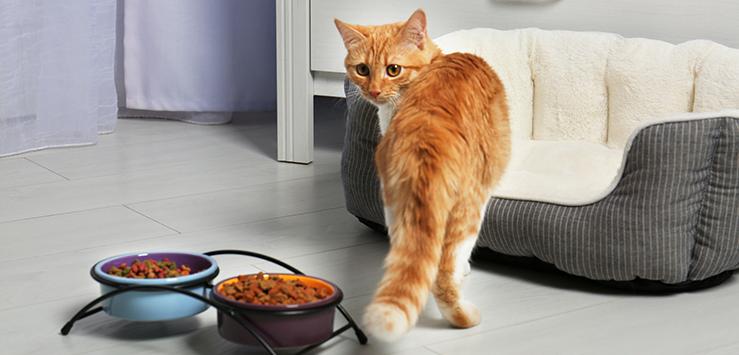 Корм для старых кошек и последствия неправильно кормления