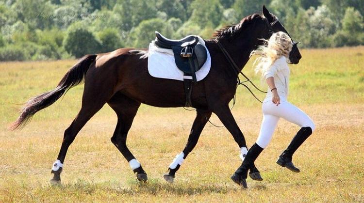 Что нужно для лошади покупка необходимого инвентаря