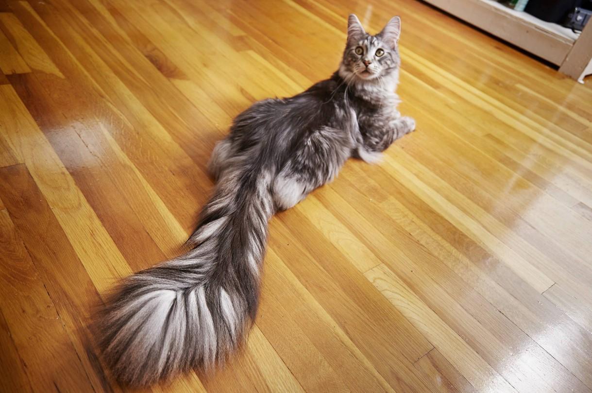 Почему кошка бегает за своим хвостом, бегающий кот