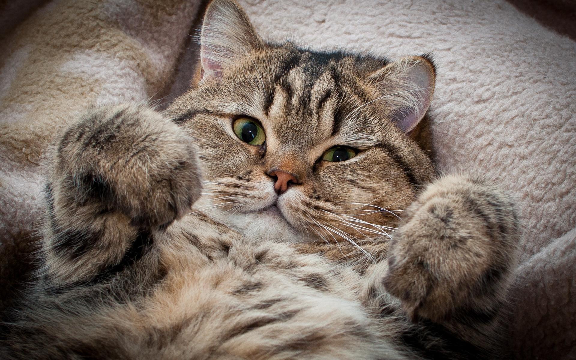 Интересные факты о кошках: удивительные, необычные и забавные факты о домашних котах || Самые необычные факты из жизни кошек