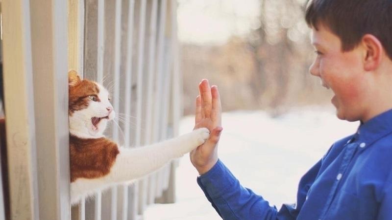 Кошки вс понимают дрессировка