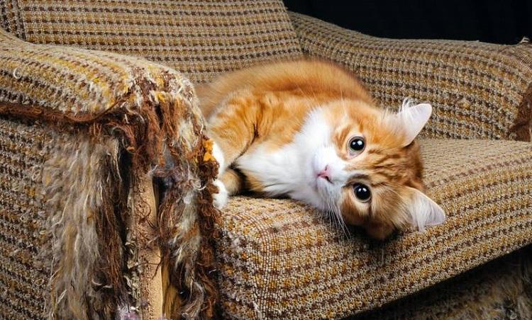 Что делать чтобы кошка не драла мебель и обои