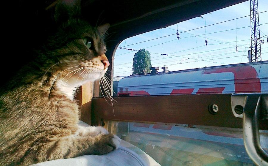 Перевоз кошек в поезде