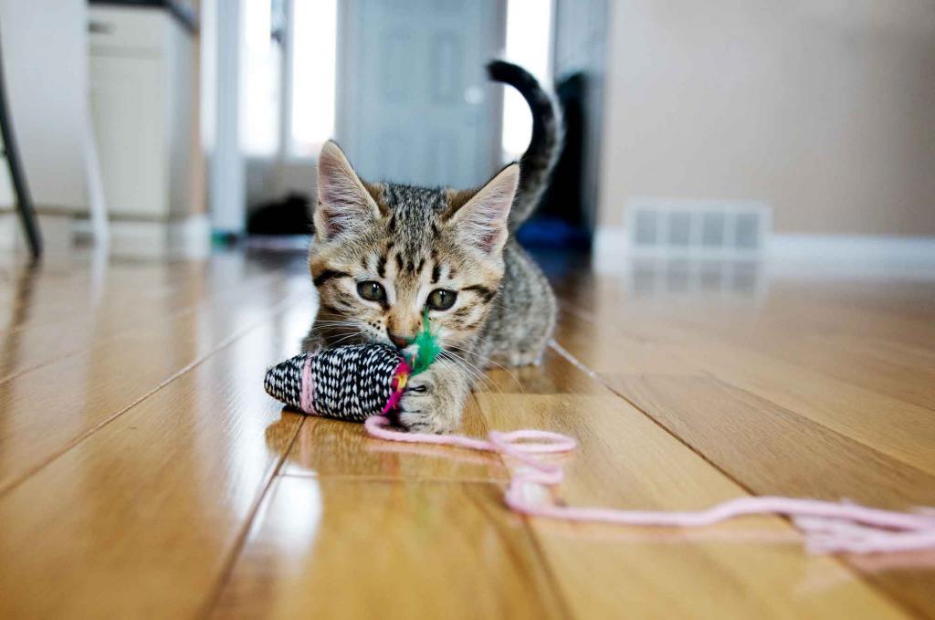 kak-sdelat-igrushku-dlya-koshki-svoimi-rukami Игрушки для котят своими руками в домашних условиях, как сделать интересную для кошки игрушку