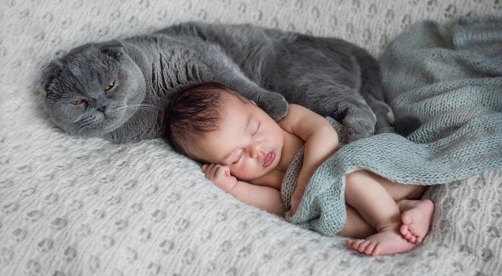 Как коты относятся к новорожденным. Чего опасаться от кота и новорожденного ребенка
