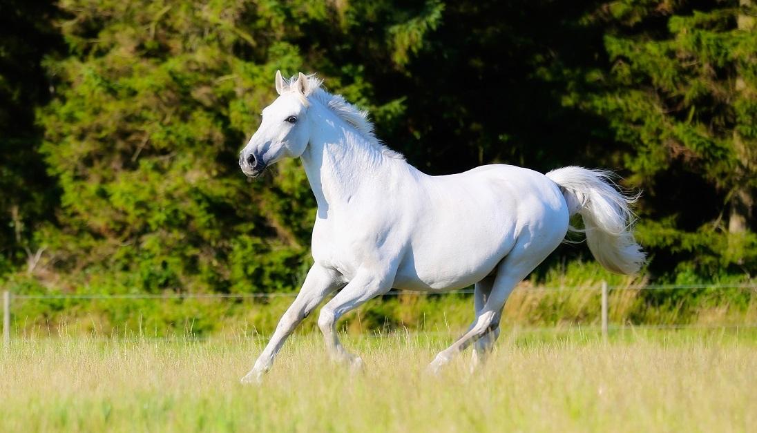 Как скачет лошадка
