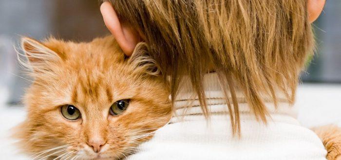 Определяем возраст кошки по человеческим меркам