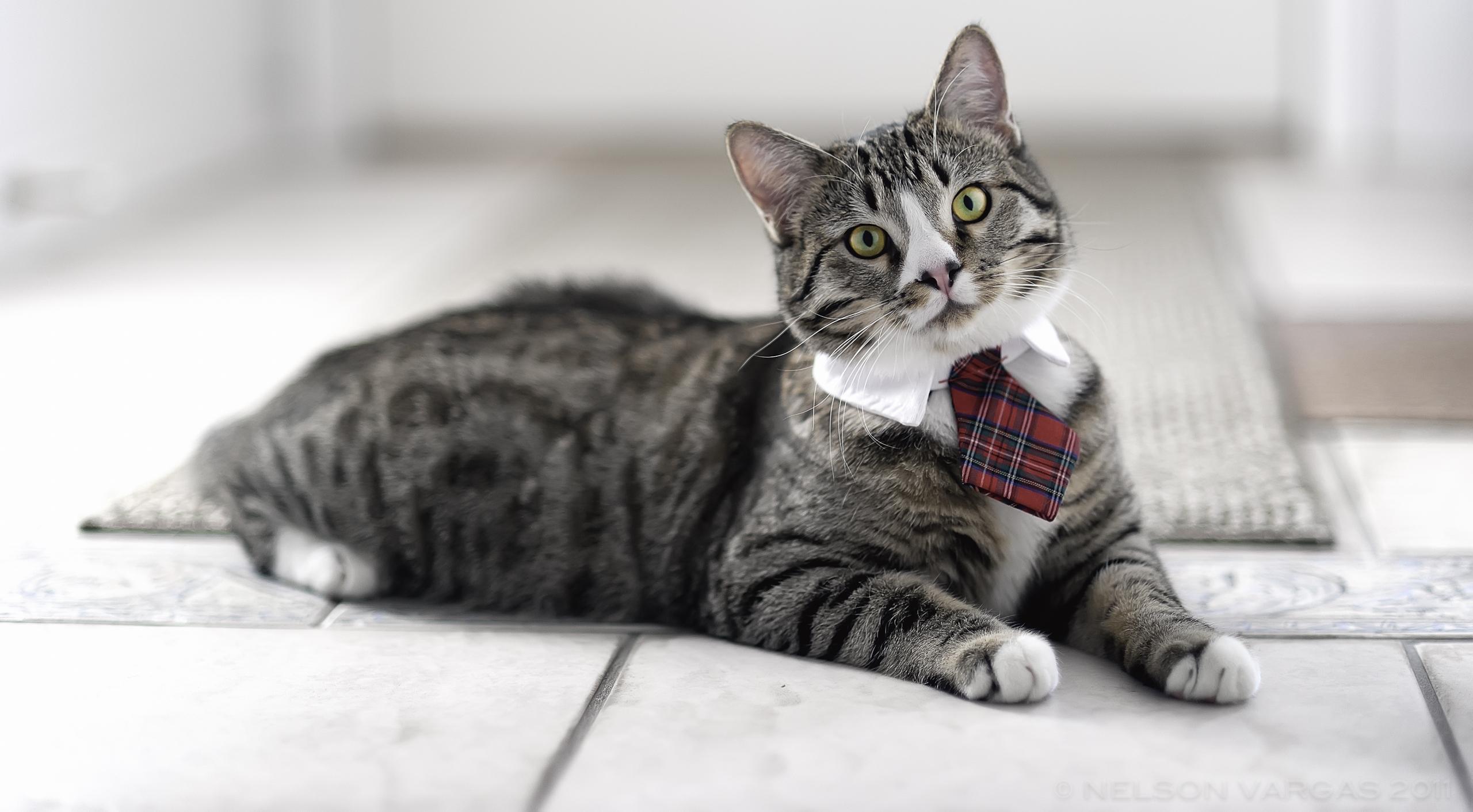 Японские клички для кошек