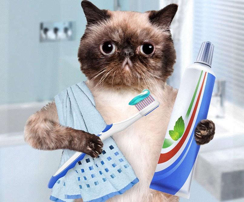 чистка зубов кошке зубной пастой