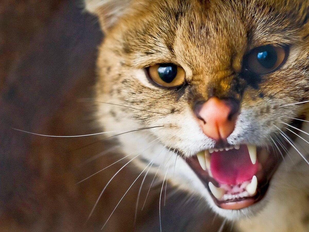картинка кота бесите подпишитесь