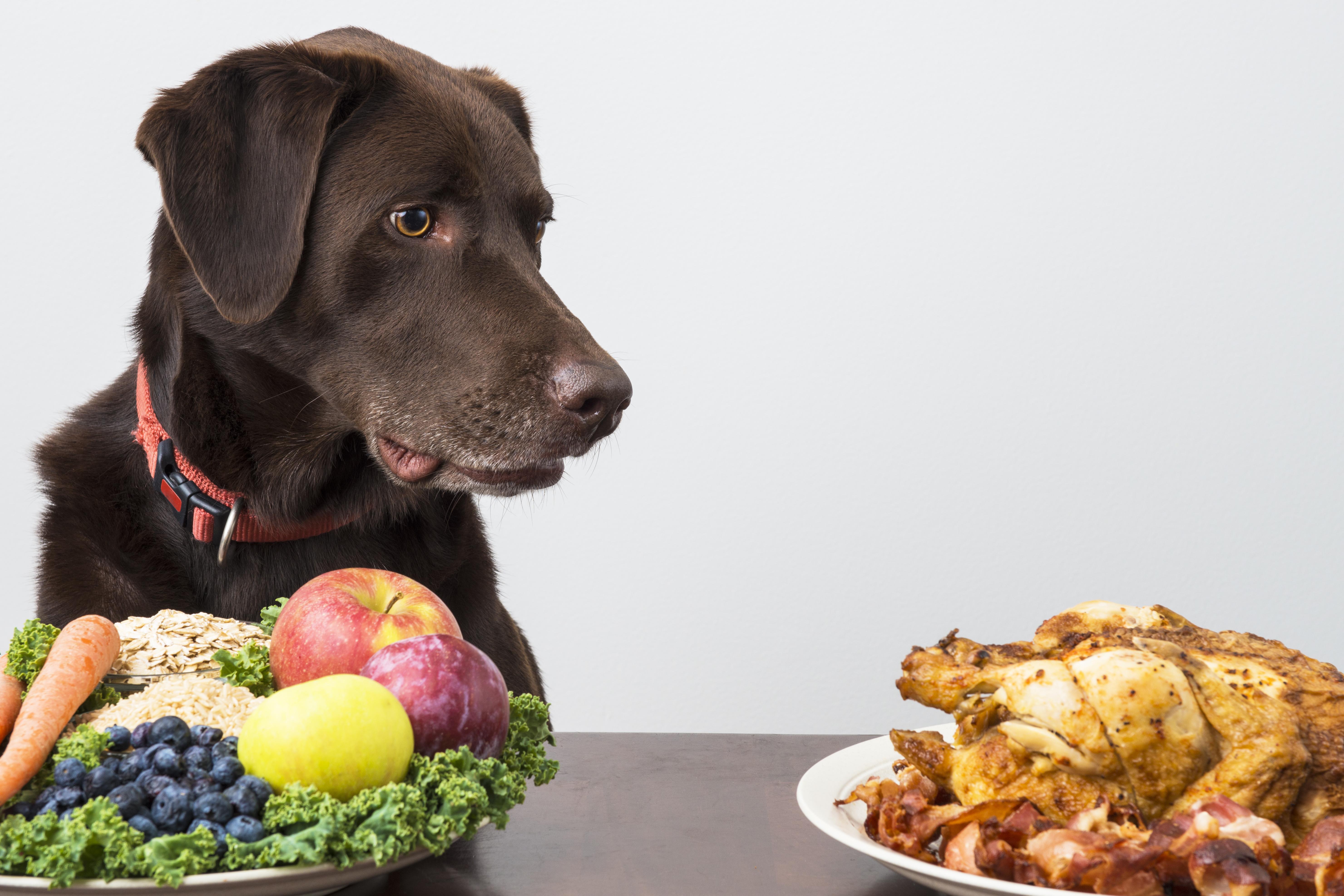 картинка еда для животных небольших домов мансардой