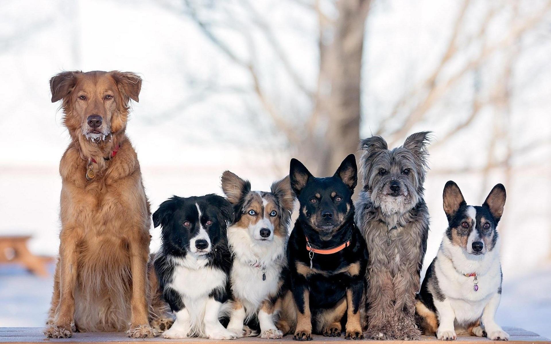 умеет рисовать фото собак разных пород щенки девушки хотят