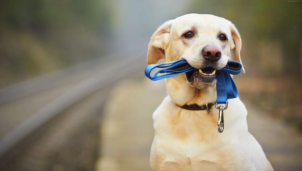 Во сколько выгуливать собаку
