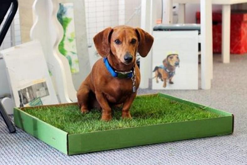 Как приучить щенка к туалету? Спрей, как средство приучения щенка к лотку. Как научить взрослую собаку ходить в туалет дома?