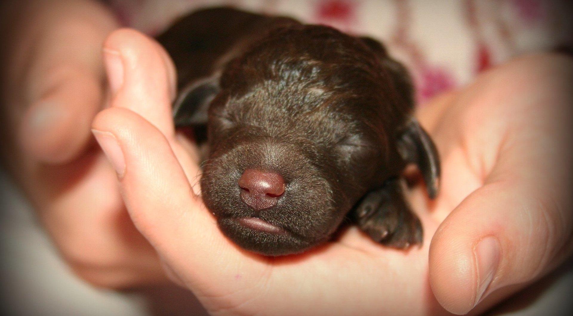 Во сколько щенки открывают глаза