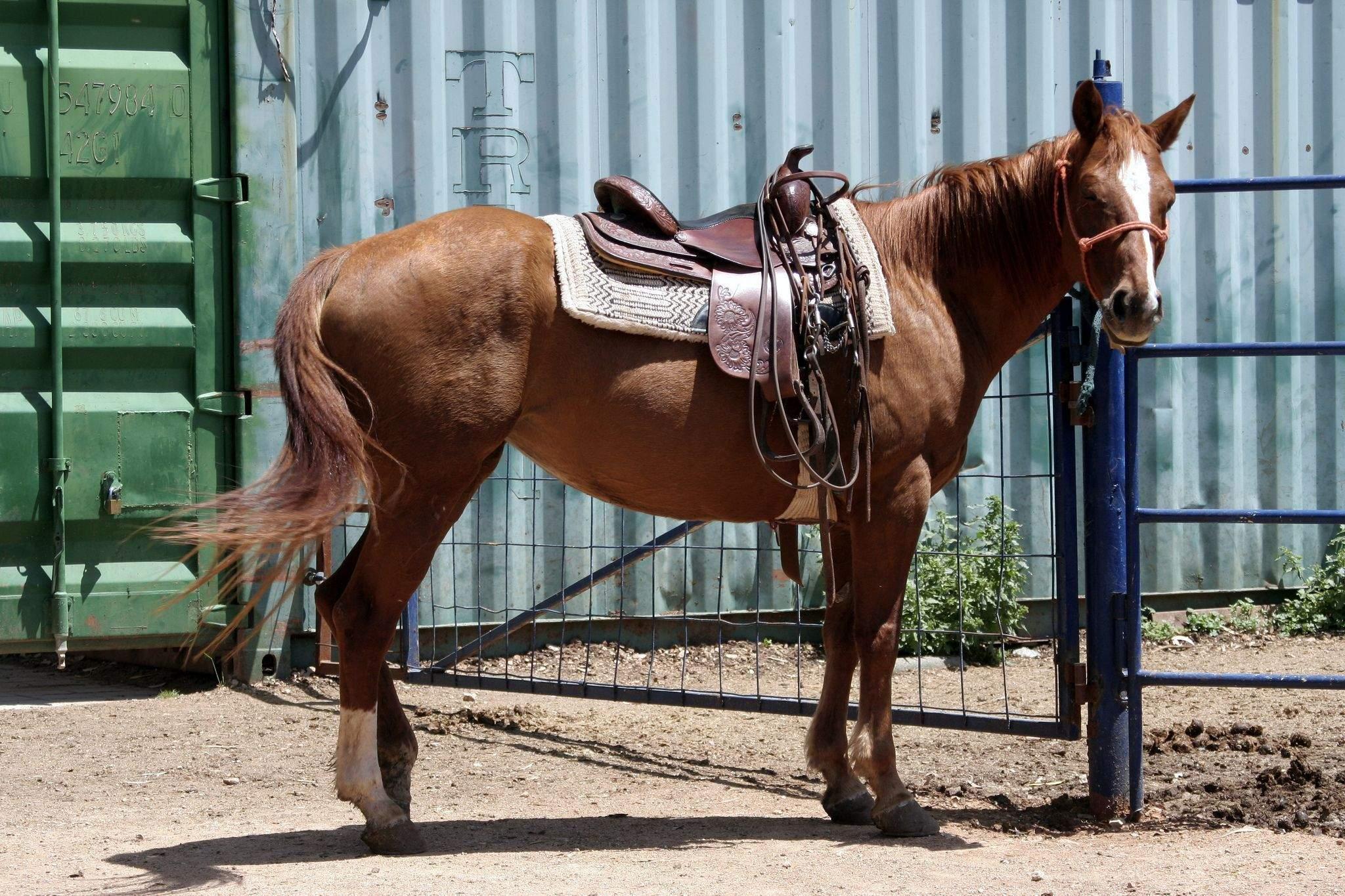 Виды седел для лошадей, как сделать седло для лошади