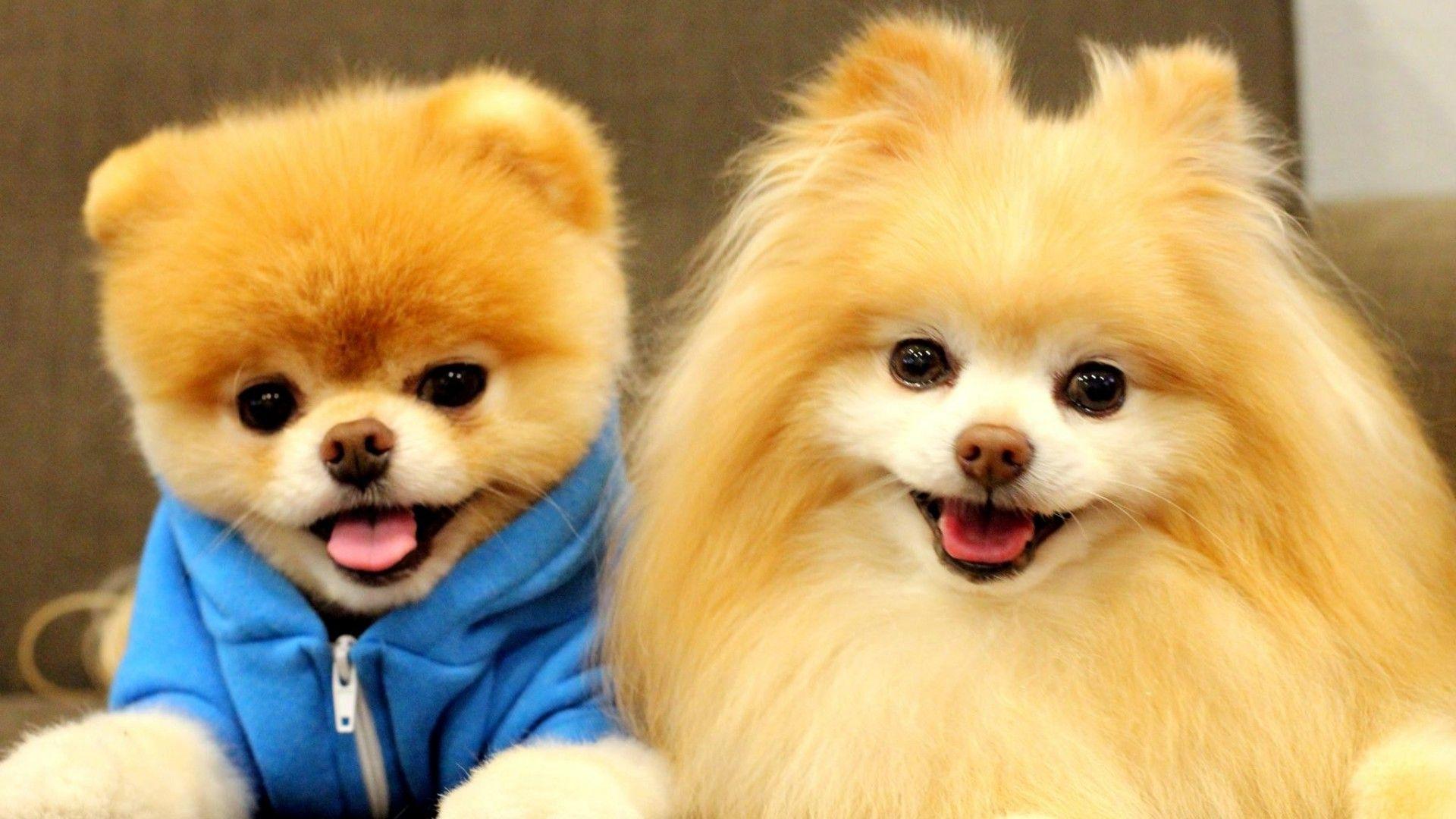 этот собачки с именами картинки постоянно общается