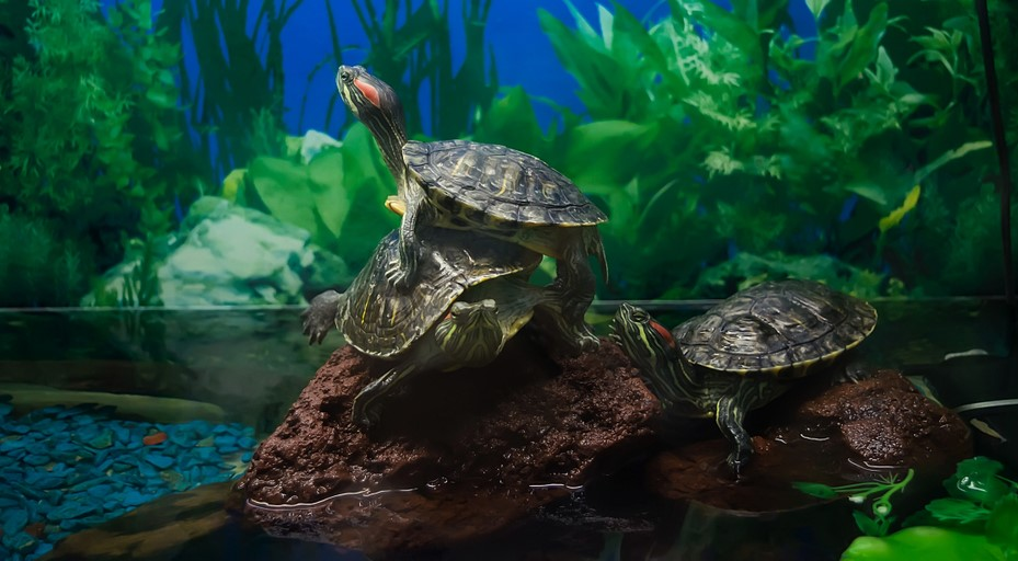 картинки аквариума для черепашки