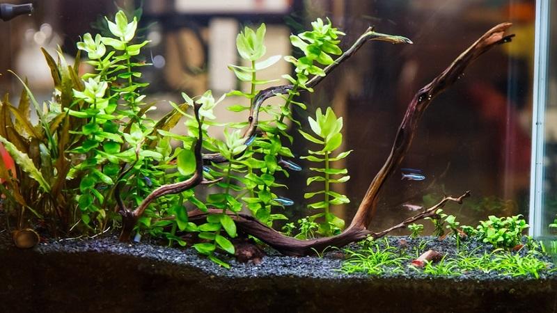 Грунт для аквариумных растений: виды, выбор и применение