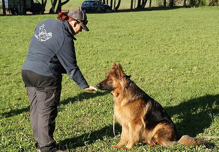 Как научить щенка и собаку команде Фу? Советы по обучению команды Нельзя