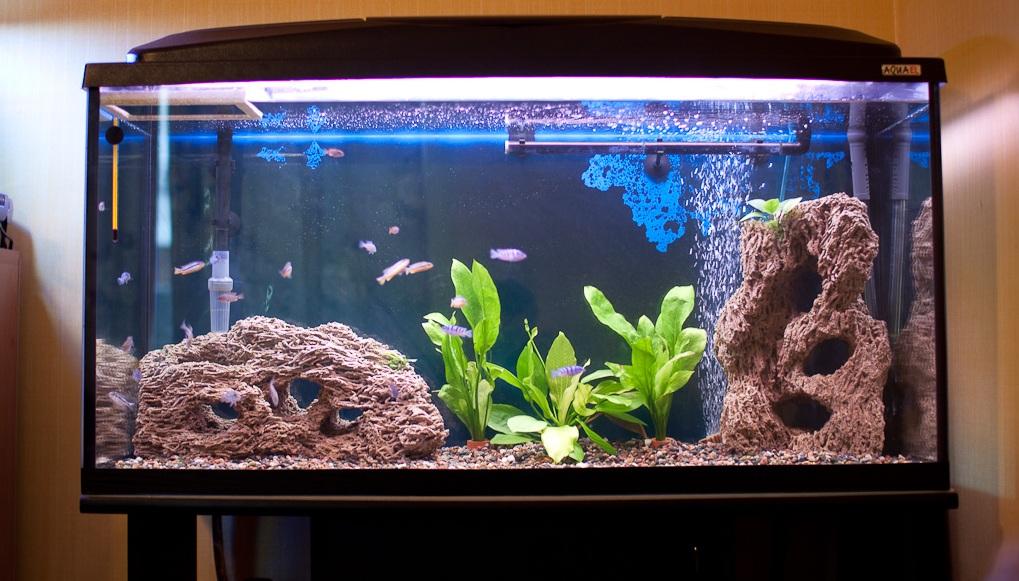 Дизайн и правила оформления аквариума – домашняя аквариумистика