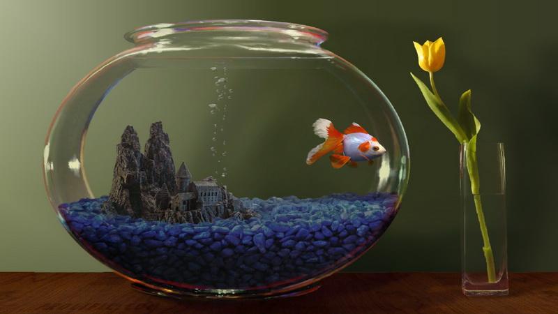 Почему в аквариуме мутнеет вода и что с этим делать?