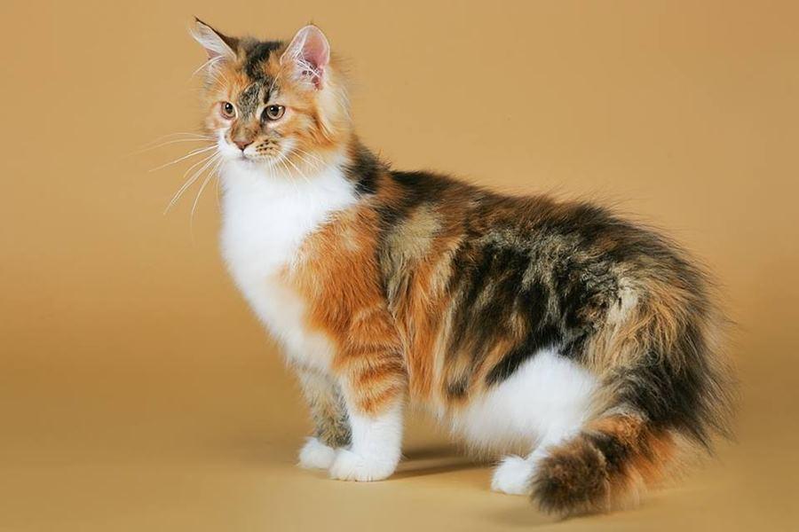 Пятнистые кошки особенности окраса Описание пятнистых кошек