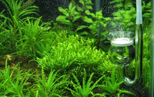 Углекислый газ для аквариума своими руками видео - Для аквариума