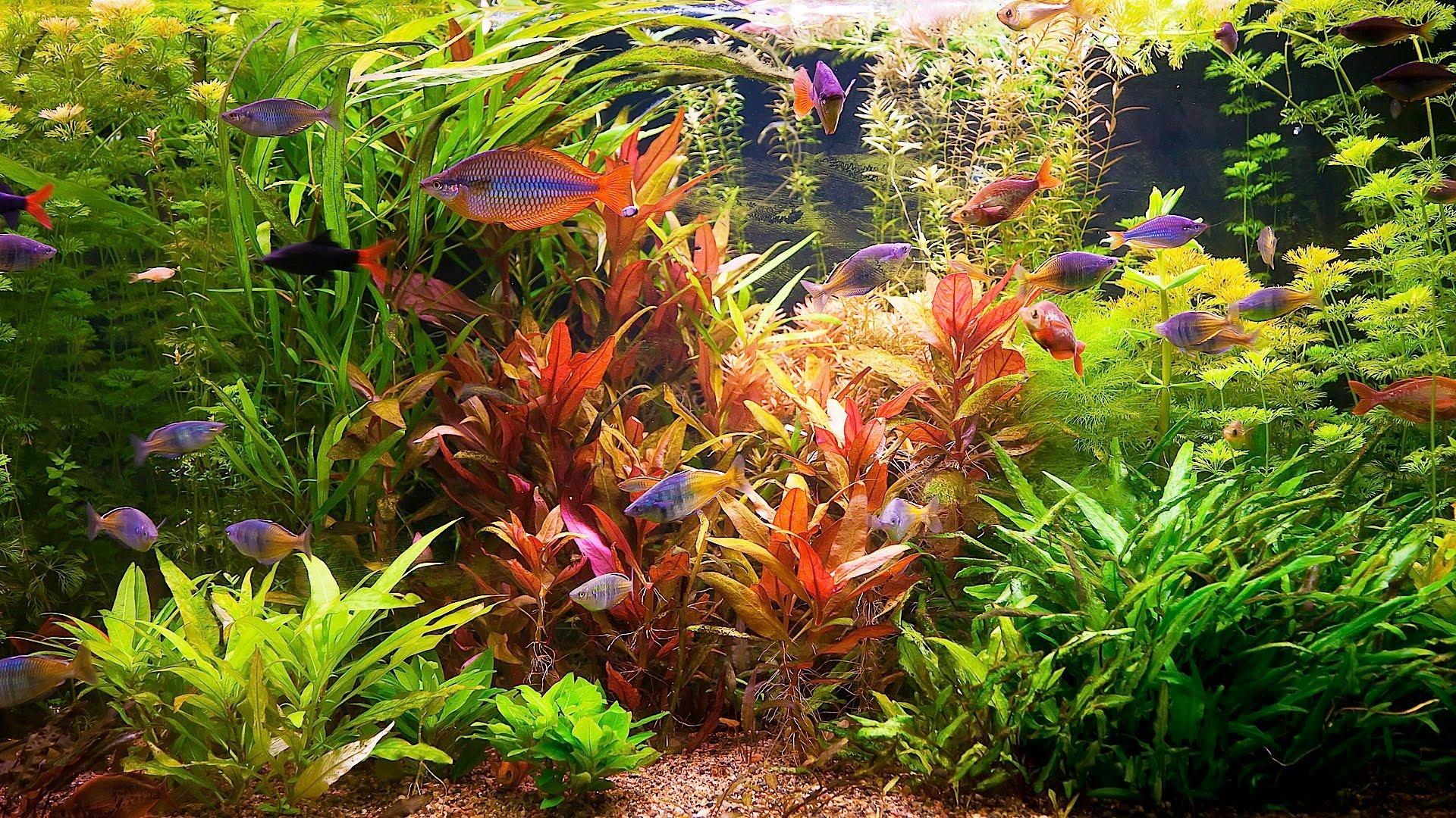 цветы картинки с рыбками качестве