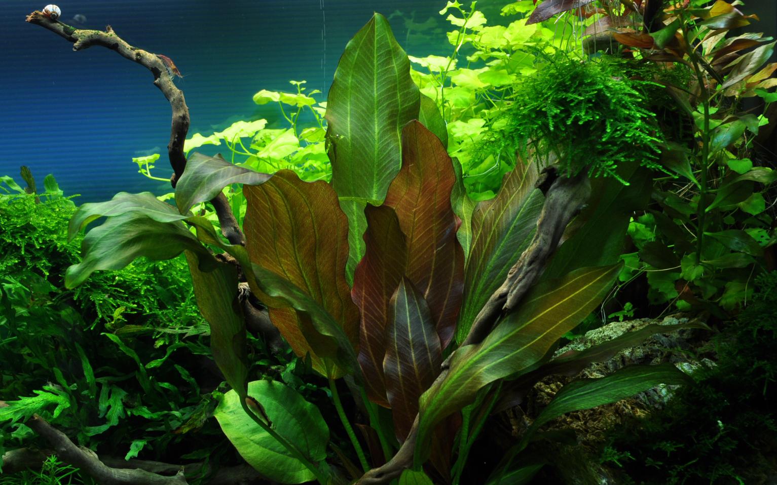 Список всех аквариумных растений по категориям с фото