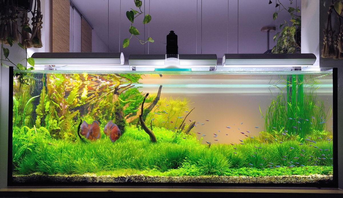 Как сделать аквариум в домашних условиях своими руками
