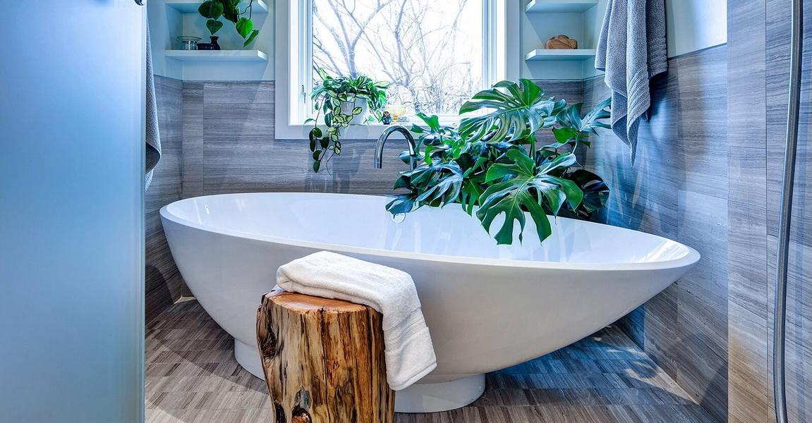 Цветы в ванной комнате: выбираем растения для комнат без окна. Какие комнатные цветы могут хорошо расти в ванной?