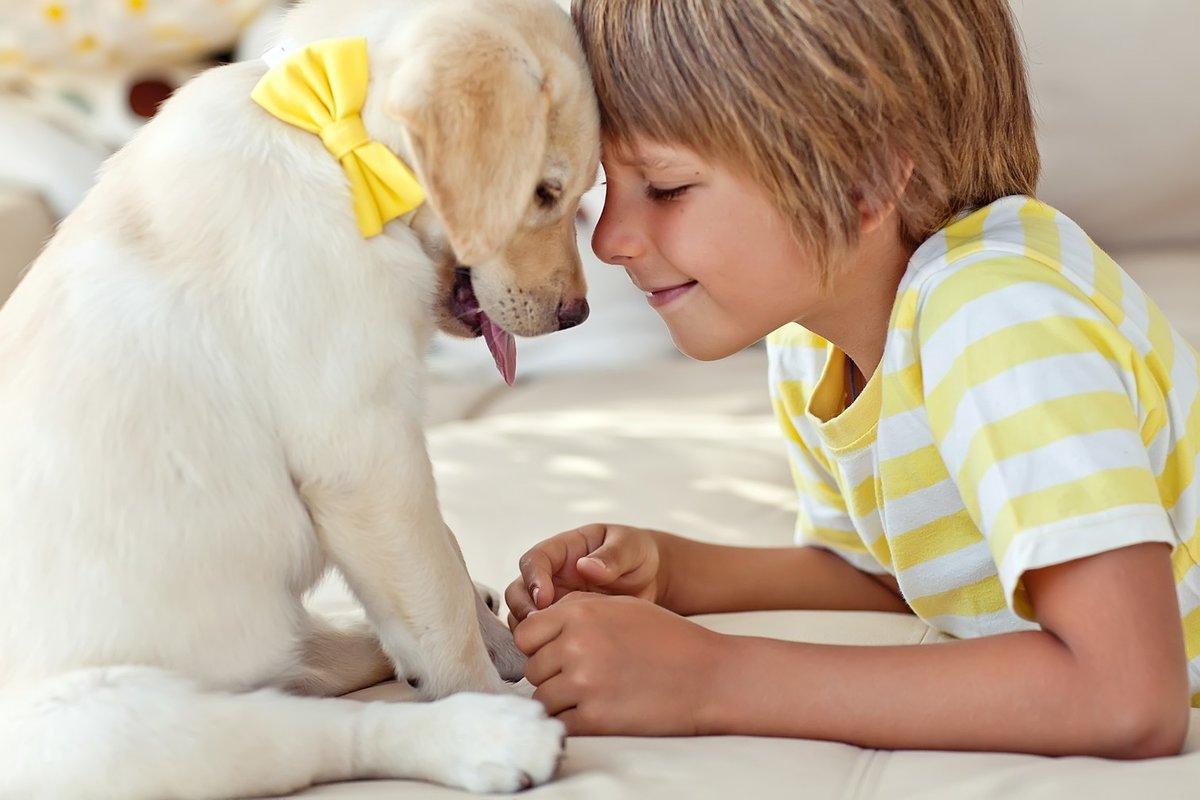 Люди и домашние животные картинки для детей