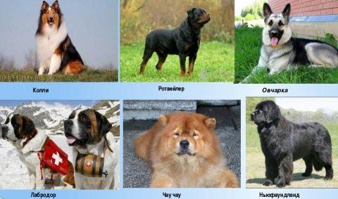 служебные собаки фото и названия