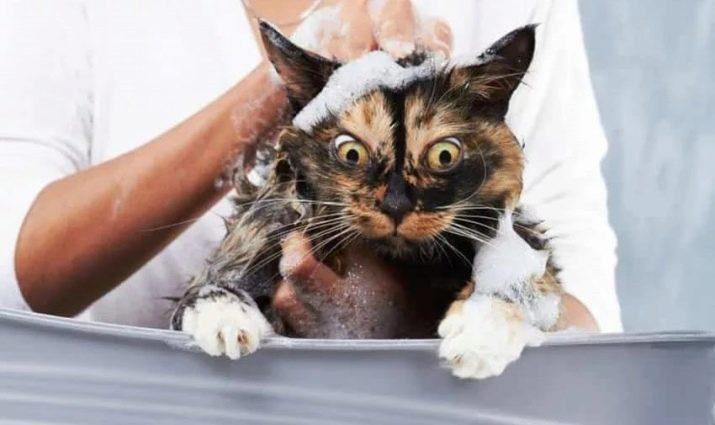 Сколько раз в неделю нужно купать кошку