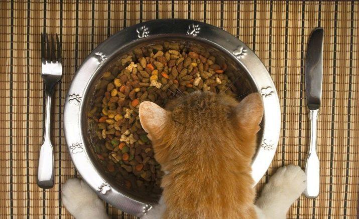 Кошка предпочитает сухой корм