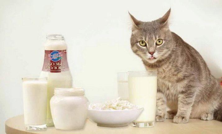 Корм для кошек шотландская прямоухая
