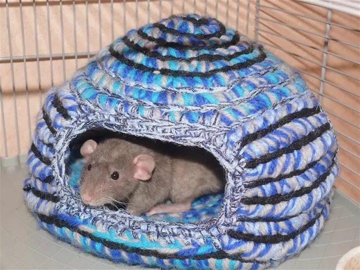 Крыса отдыхает
