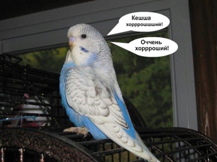 картинки говорит попугай попугаю взгляните удивительные преображения