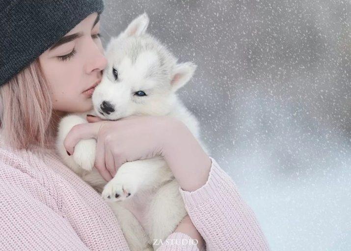 Как выбрать красивую кличку для щенка хаски: варианты для мальчика и девочки 6
