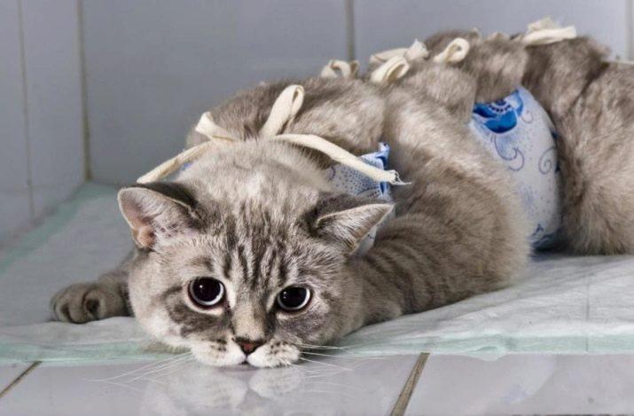 Как кошку перевести на новый корм