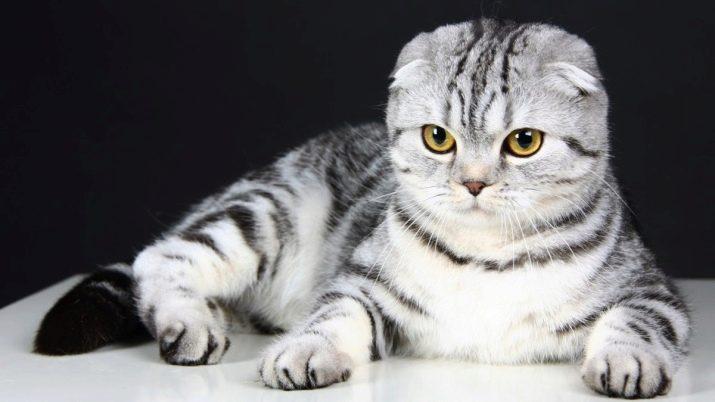 Порода кошек которые не гадят