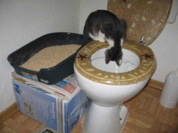Туалет для кошек обучающий