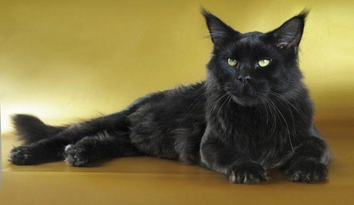 Порода черная кошка с желтыми глазами порода фото